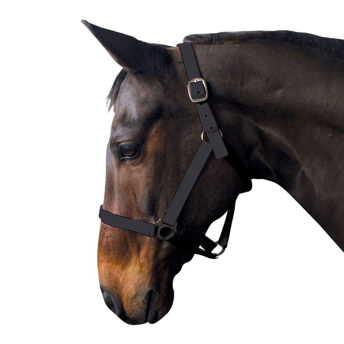 Requisite Econ Head Collar Horse Riding Accessories Headcollar